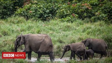 Photo of Gabon is first African country paid to protect its rainforest
