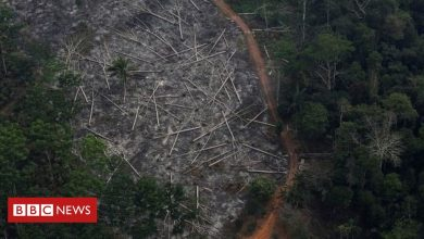 Photo of Brazil's environment minister quits amid illegal logging investigation