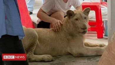 Photo of Pet lion confiscated in Cambodia after TikTok videos