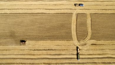 Photo of Russia's wheat exports surge over 7% during current agricultural season