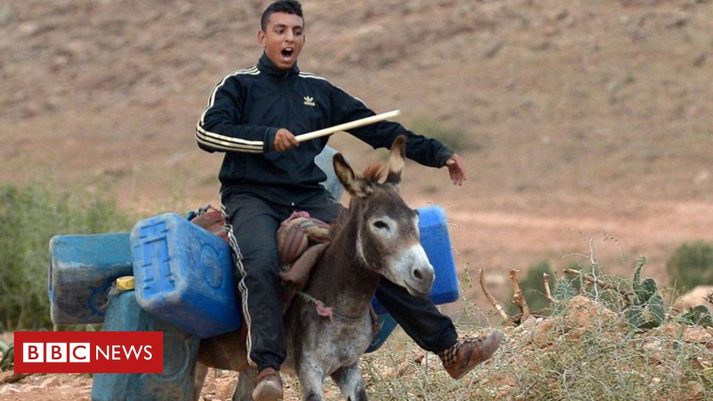 letter-from-africa:-lamenting-the-algeria-morocco-border-closure