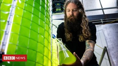 Photo of Climate change: The craft brewery using algae to cut emissions