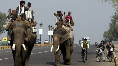 Photo of Economic activity picks up across India as mobility levels rise
