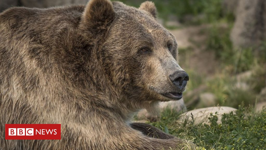 us-woman-killed-by-bear-that-dragged-her-from-tent-in-montana