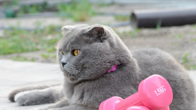 Photo of Keeping Your Cat Fit: A Guide to Preventing and Treating Obesity
