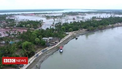 Photo of Sundarbans: why the world's largest mangrove forest is sinking