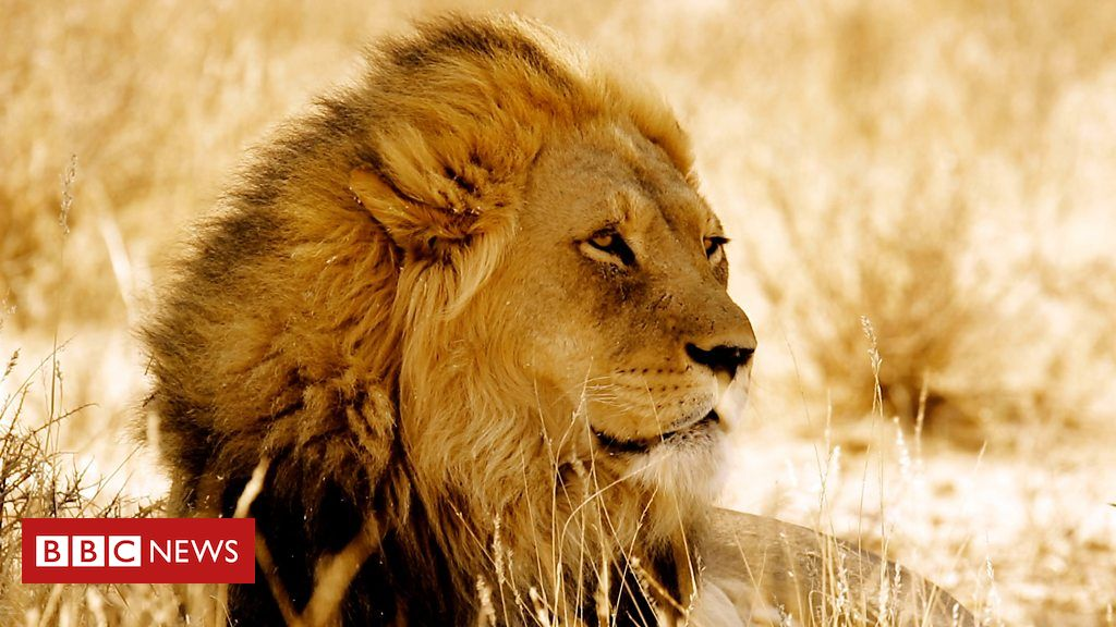 is-there-a-future-for-africa's-lions?