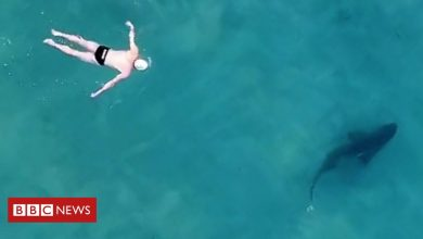 Photo of Sharks from above: Filming 'friendly' encounters in Sydney