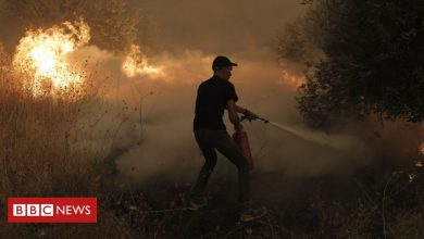Photo of Greece wildfires: 'It's like a horror movie but it's real life'