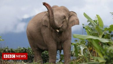 Photo of There and back again: The epic adventures of China's wandering elephants