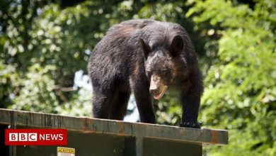 Photo of California man sues after being startled by dumpster-diving bear