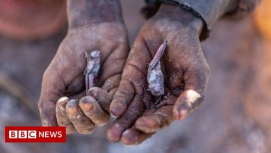 Photo of Madagascar on the brink of climate change-induced famine