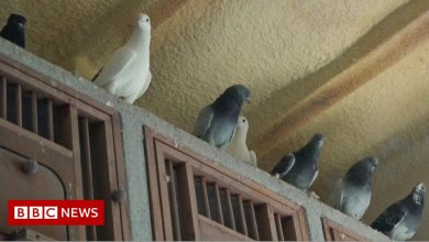 Photo of Turkey lockdown: Pigeon-keeping in Istanbul on the rise