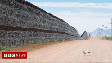 Photo of Image of bird at US-Mexico border wall wins contest